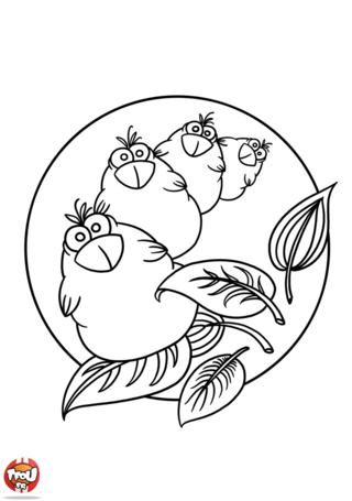 Coloriage: Mandala chouette