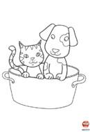 Le toilettage du chien et du chat