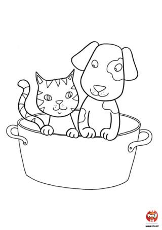 Coloriage : Le toilettage du chien et du chat. Un chien et un chat qui font leur toilettage ensemble c'est adorable ! A toi d'ajouter les couleurs de ton choix sur ce beau coloriage en l'imprimant gratuitement sur TFou.fr.