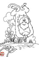 Le singe plonge