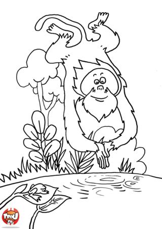Coloriage: Le singe plonge