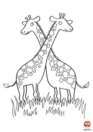 Coloriage: Couple de girafe. Amuse toi à colorier ce couple de girafe en imprimant gratuitement ce coloriage sur TFou.fr.
