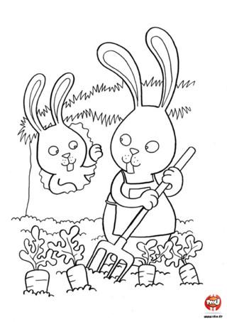 Coloriage : Le lapin dans son potager. Pour manger les carottes comme ils les aiment, les lapins ont leur propre potager de carottes ! Amuse-toi à colorier ce joli dessin et ajoute les couleurs de ton choix sur les carottes et les lapins.