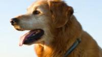 Tous les enfants rêvent d'avoir un chien à la maison non ? Avec les coloriages à imprimer TFou tu peux avoir tous les chiens que tu aimes.