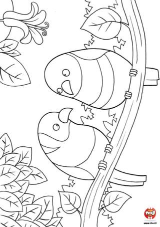 Coloriage : Les oiseaux sur une branche. Avec l'arrivée du soleil, les oiseaux se rassemblent pour discuter sur une branche. Imprime ce joli coloriage pour le colorier avec tes feutres ou tes crayons de couleurs. Tu peux peux même décorer ta chambre en l'imprimant gratuitement autant de fois que tu le souhaites.
