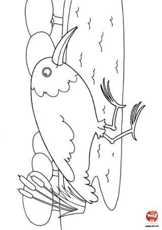 Coloriage : L'oiseau marche. Imprime vite ce coloriage et amuse toi à colorier ce bel oiseau de toutes les couleurs !