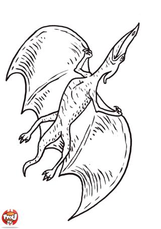 Coloriage: Ptéranodon