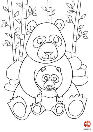 Coloriage : Maman panda et bébé panda. Imprime vite cet adorable coloriage d'une maman panda et de son bébé