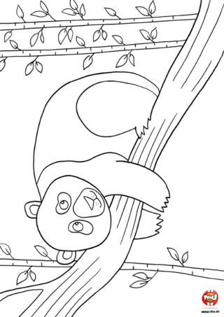 Coloriage : Panda et bambou. Imprime vite le coloriage de ce panda qui se repose sur une branche. Tu peux l'imprimer gratuitement autant de fois que tu le souhaites et y ajouter les couleurs de ton choix.