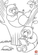 Les pandas lisent un livre