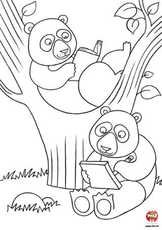 Coloriage : Les pandas lisent un livre. Imprime vite ce coloriage et choisi les couleurs de ton choix pour colorier les pandas