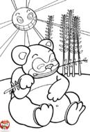 Panda mange du bambou