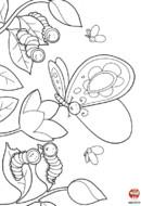 Le papillon et les chenilles