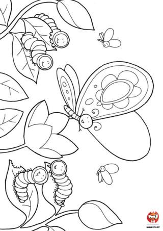 Coloriage : Le papillon et les chenilles. Le beau papillon raconte aux chenilles comment il est devenu si beau ! Donne vite plein de couleurs à ce joli dessin en impriment gratuitement ce coloriage sur TFou.fr.