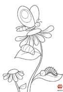 Le papillon sur la fleur