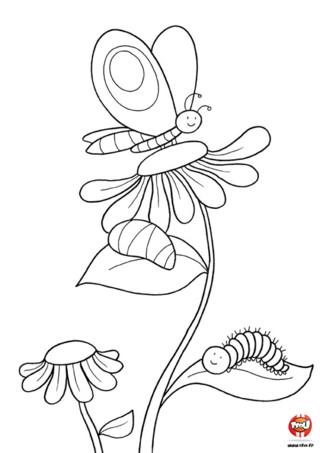 Coloriage : Le papillon sur la fleur. Tu peux imprimer gratuitement ce coloriage d'un joli papillon et le colorier avec toutes les couleurs de ton choix. Alors à toi de jouer !