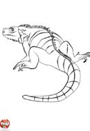 Iguane de dos