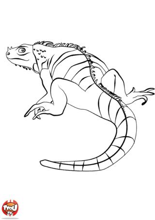 Coloriage: Iguane de dos