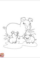 Cochon et bébés