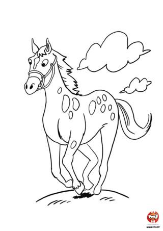 Voici un super coloriage de cheval à imprimer sur TFou.fr ! Ce cheval, c'est Alex. Il vit dans une grande praire quelque part en France...pas si loin de ta région d'ailleurs ! Comme il sait que tu aimes les chevaux mais que peut-être n'as-tu pas la possibilité d'en voir tous les jours, il te propose de le colorier avec tes plus belles couleurs et d'afficher ton oeuvre d'art dans ta chambre. N'est-il pas super cool ce cheval ? Alors vite, imprime le coloriage d'Alex le cheval sur TFou.fr et amuse-toi à le colorier !