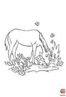 coloriage cheval - Une pause pour se désaltérer
