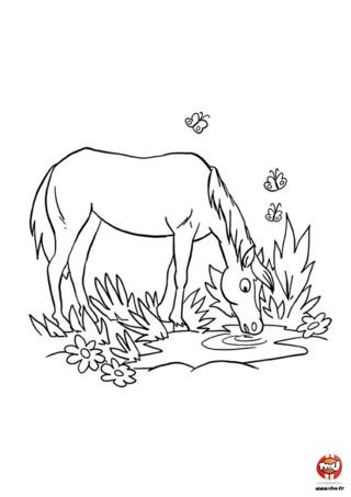 Encore un super coloriage gratuit pour enfant de cheval sur TFou.fr ! Imprime-le et amuse-toi vite. Les chevaux aussi ont besoin d'une petite pause pour se désaltérer durant une belle journée pleine d'activités. De la course au saut d'obstacles en passant par une session de jeu et de câlins avec d'adorables enfants, il y a toujours un max de choses à faire pour ne pas s'ennuyer ! Et entre tout ça, une petite balade vers la rivière pour étancher sa soif sous le soleil en compagnie de ses amis les papillons ça fait toujours du bien.