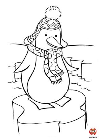 Coloriage : Le pingouin en écharpe. Même un pingouin a besoin de se protéger du froid. Imprime vite le coloriage de cet adorable pingouin et ajoute toutes les couleurs de ton choix.