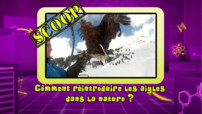 News_photo-bonus_aigles