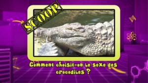 News_photo-bonus_crocodiles_tfou-lab