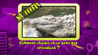 News_photo-bonus_crocodiles_tfou-lab