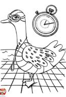 Oie à lunettes