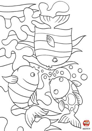Coloriage : Plein de poissons. Imprime vite ce joli coloriage pour lui donner de la couleurs. Ces poissons seront beaucoup plus jolis une fois que tu les auras colorié.