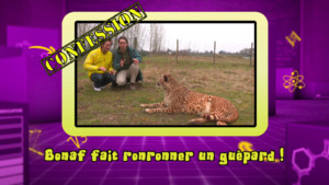 News_photo-bonus_guepard