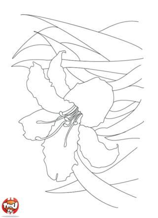 Coloriage: Iris