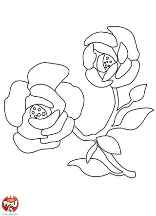 Coloriage : Les fleurs sont de véritables beautés de la nature. Il existe une multitude de fleurs de toutes les couleurs. Les fleurs sont appréciées de tous et en particulier les roses. Parfois, blanche, jaune, rose et rouge, les roses sont de magnifiques fleurs au parfum enivrant. Si tu aimes les fleurs, imprime gratuitement ce superbe coloriage de rose sur TFou.fr. Tu trouveras également d'autres très beaux coloriages de fleurs à embellir avec des couleurs.