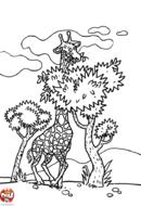 Girafe qui mange