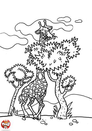 Coloriage: Girafe qui mange