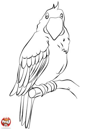 Coloriage: Perroquet sur sa branche