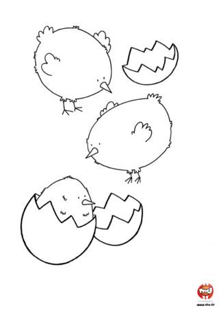 Coloriage : Trois petits poussins. Imprime vite ce coloriage pour pouvoir colorier avec les couleurs de ton choix ces trois adorables petits poussins qui sortent de leur coquille.