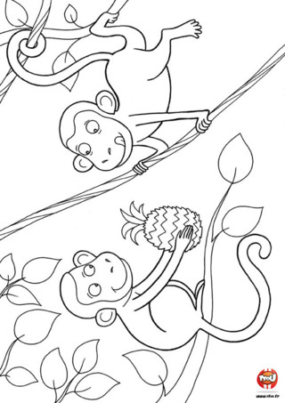 Coloriage : Les singes et l'ananas. Miam, un ananas ! Imprime vite ce coloriage de deux singes qui partagent un ananas et colorie-le avec toutes les couleurs de ton choix.