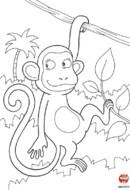 Le singe pendu à son arbre