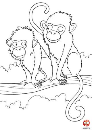 Coloriage : Papa et maman singe. Colorie vite ces deux singes amoureux en imprimant gratuitement ce coloriage.