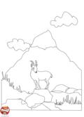 Chamois dans la montagne