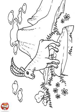 Coloriage: imprime gratuitement sur TFou.fr ce superbe dessin de bouquetin qui est tout en haut d'une belle montagne enneigée. Colorie le selon tes envies et décore ta chambre !