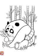 Panda et bambous