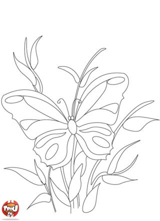 Coloriage: Papillon sur une tige