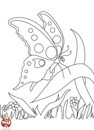 Coloriage: Papillon sur une feuille