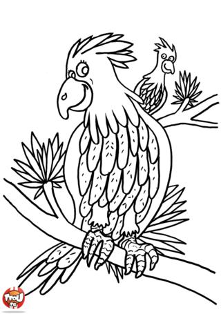 Coloriage: 2 perroquets