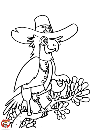 Coloriage: Perroquet pirate