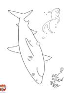 Requin dans la mer